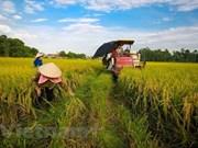Apunta Vietnam a lograr este año 21 mil millones de dólares por exportaciones agrícolas
