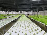 Buscan Vietnam y Australia impulsar la cooperación en agricultura orgánica