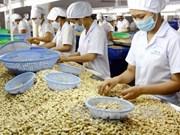 Vietnam, mayor exportador mundial de anacardo