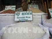 Prevé China importar 400 mil toneladas de arroz de Camboya