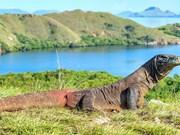 Indonesia cerrará temporalmente islas de dragón de Komodo