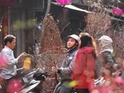 Mercado de flores en la calle Hang Luoc