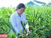 Científica vietnamita eleva el valor de las hierbas medicinales