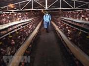 Refuerza Vietnam su lucha contra la gripe aviar