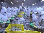 Vietnam aumentará este año exportación de camarones a Corea del Sur