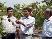 Provincia vietnamita de Tay Ninh hacia una agricultura sostenible