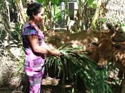 Trabaja provincia survietnamita de Tra Vinh para mejorar la vida de los jemeres