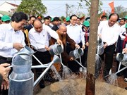 Estimula primer ministro de Vietnam plantación de árboles