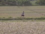 Firma la FAO acuerdo con Myanmar sobre seguridad alimentaria