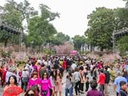 Festival de flor de cerezo atrae las maravillas del mundo a Vietnam