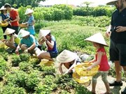 Delta del Mekong de Vietnam apunta a promover el turismo agrícola
