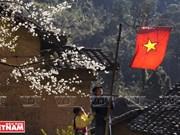 Hechizan a turistas flores de melocotón en la meseta rocosa Dong Van
