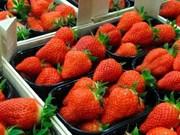 Aspira Corea del Sur a conquistar mercado agrícola de ASEAN