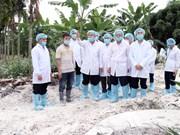 Pide en Vietnam ofrecer asistencia a agricultores afectados por la peste porcina africana
