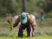 Llama premier de Camboya a diversificar mercados para la exportación de arroz