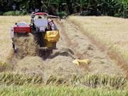Registra sector agrícola de Vietnam superávit comercial en primeros dos meses del año