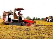 Promueven producción y consumo agropecuario de Vietnam
