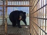 Convocan en Vietnam a premio por la protección de animales silvestres