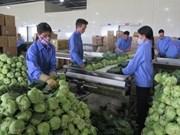 Merman exportaciones vietnamitas de frutas y verduras en el primer bimestre de 2019