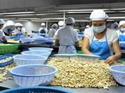 Acuerdan Vietnam e India cooperación para comercialización de anacardo