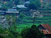 Efectuarán Fiesta de la Flor de Bauhinia 2019 en Vietnam