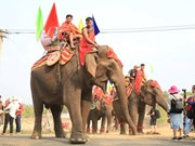 Celebran en Vietnam competencias de elefantes durante Festival de Café de Buon Ma Thuot