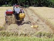 Impulsan en provincia vietnamita de Kien Giang proyectos en agricultura y desarrollo rural