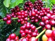 Presenta Vietnam productos en feria de café, culinaria y restaurantes en Singapur