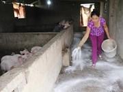 Recomienda FAO a Vietnam mantener alta  la vigilancia contra la Peste Porcina Africana