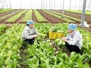 Planifica Vietnam llegar en 2020 a cinco mil millones de dólares en exportación de frutas y verduras