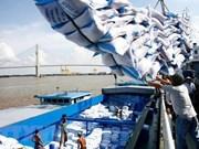 Avizora Vietnam oportunidad de exportar  arroz a Egipto