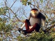 Sesiona en Vietnam seminario sobre protección de precioso primate