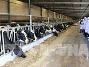 Inauguran la granja  lechera más grande de Vietnam