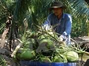 Registra provincia vietnamita de Ben Tre altos ingresos por exportaciones