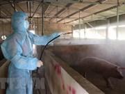 Vietnam capaz de producir una vacuna contra peste porcina africana