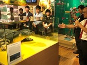 Exhiben en Vietnam copia de la tortuga sagrada del lago Hoan Kiem