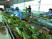 Impulsan cooperación entre Vietnam y Países Bajos en agricultura