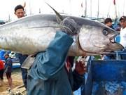 Se multiplicaron por ocho las exportaciones de atún vietnamita a China