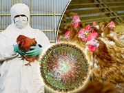 Camboya reporta primer brote de gripe aviar H5N6