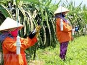Vietnam carece de 3,2 millones de agricultores capacitados en 2020