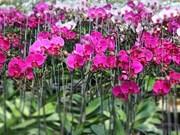 Celebrarán primer Festival de Orquídeas en Ciudad Ho Chi Minh