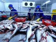 Fortalece Vietnam su lucha contra la pesca ilegal