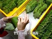 Recomiendan a turistas vietnamitas que no lleven alimentos frescos a Japón