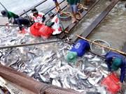 Mantendrá Estados Unidos altos aranceles a importación del pescado Tra de Vietnam