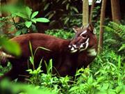 Alemania patrocina proyecto de conservación de biodiversidad en provincia vietnamita