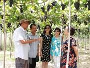Aumenta la llegada de turistas a ciudad vietnamita de Ninh Thuan en días feriados