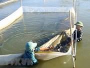 Destinará Vietnam a recuperación del ecosistema la indemnización por incidente ambiental