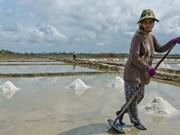 Camboya podría enfrentar escasez de sal este año