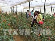 Aumenta llegada de turistas a ciudad altiplánica vietnamita de Da Lat