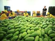 Exportó empresa vietnamita 71 toneladas de mango a Estados Unidos